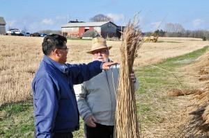 Akio og Søren ser på årets høst af elefantgræs til stråtag.