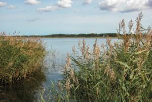 Stråtag af danske tagrør er miljømæssigt nummer 1, viser livscyklusanalysen.